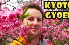 Cherry Blossoms – Kyoto Gyoen National Garden Japan