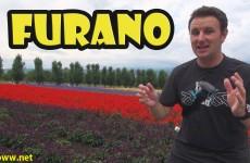 Furano Flower Fields of Hokkaido Japan