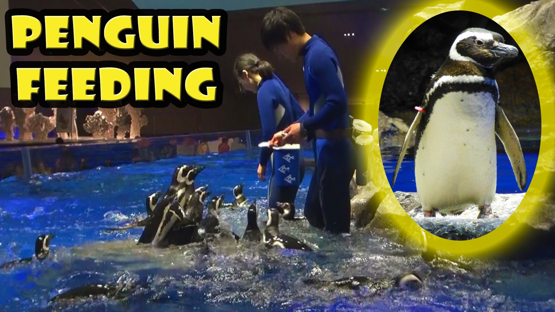 Penguin Feeding at Sumida Aquarium Tokyo Skytee - Yellow Productions Travel V...
