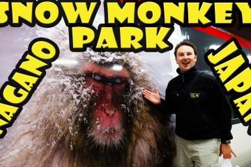 Jigokudani Snow Monkey Park in Nagano Japan